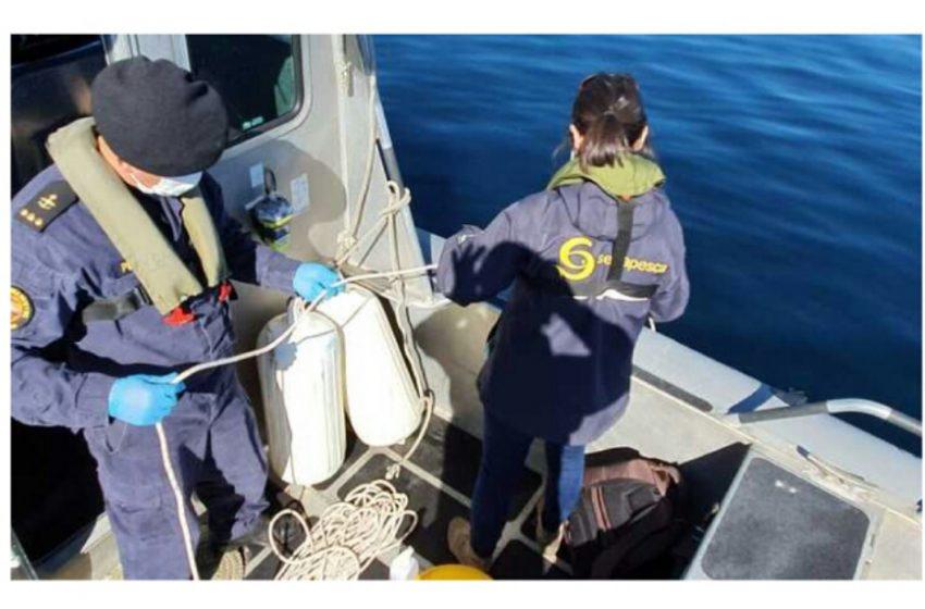 Investigan a otro centro salmonero donde están muriendo peces en Chiloé