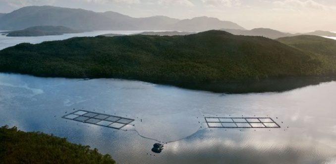Industria salmonera en la Patagonia siempre al filo de la ilegalidad