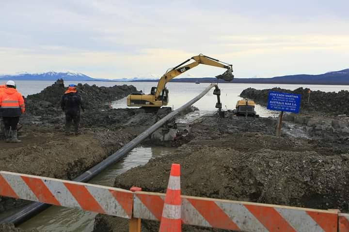 Megaplanta salmonera afecta el hábitat del cisne de cuello negro al sur de Puerto Natales