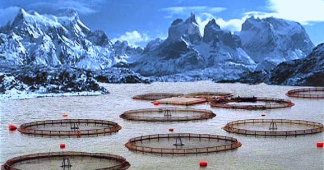 ¿De capital del turismo a capital del salmón?