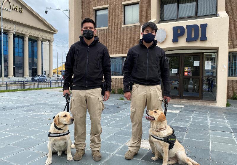 Nuevo ejemplar canino se suma a la Brigada  Antinarcóticos de la PDI en Punta Arenas
