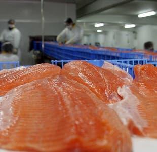 Covid-19 y Salmón en Chile: Alerta al mercado internacional por alto contagio de Virus en ciudades salmoneras de la Patagonia