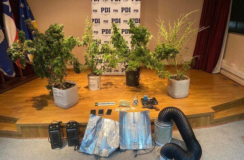 En un procedimiento PDI incauta drogas, un arma de fogueo y detiene a tres sujetos en Puerto Natales